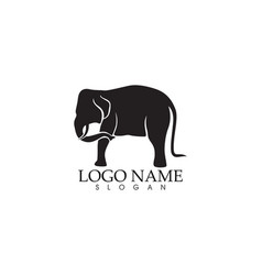 Elephant logo and symbols template app vector