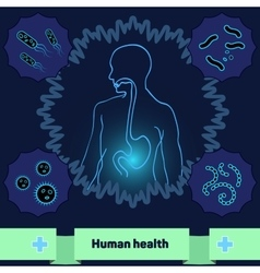 Protection of body against harmful bacteria a vector image