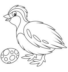 quail vector image