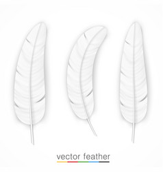 white feather on white background set vector image