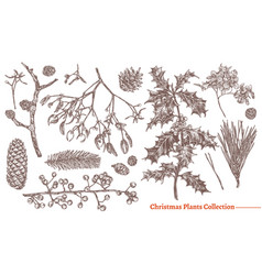 christmas festive vintage collection plants vector image