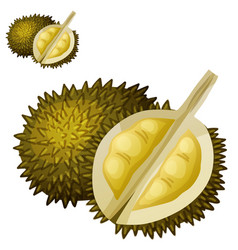 durian fruit cartoon icon isolated vector image