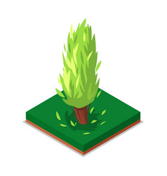 green poplar tree isometric 3d icon vector image