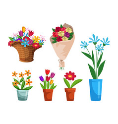 isolated flower bouquet in wrap and flowerpot set vector image