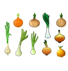 Onion bulbs and leek vegetables vector