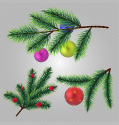 realistic christmas fir tree branches with vector image