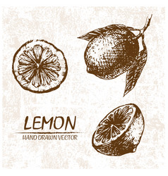 Digital detailed lemon hand drawn vector