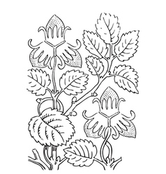 Hand drawn of strawberry bushes Branch with buds vector image