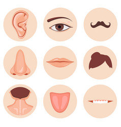 Human nose ear mouth mustache hair and eye neck vector