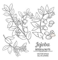 jojoba plant set on white background vector image