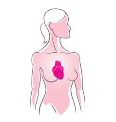anatomy vector image vector image