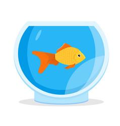 aquarium goldfish icon flat style vector image