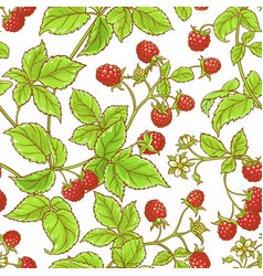 aspberry branch pattern vector image