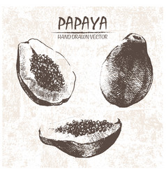 Digital detailed papaya hand drawn vector