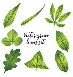 Leaves different shapes a vector
