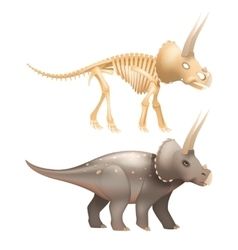 Triceratops dinosaur art with skeleton vector image