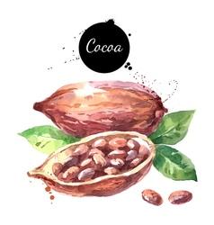 Watercolor hand drawn cocoa pod Isolated organic vector