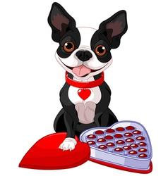 Valentine day Boston terrier vector image