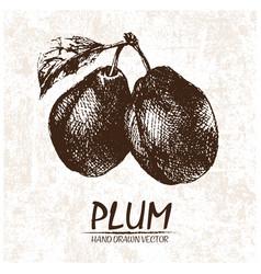 Digital detailed plum hand drawn vector