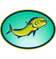 dolphin fish or mahi mahi vector image