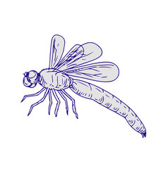 dragonfly flying drawing side vector image