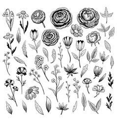 Set hand drawn flowers branches and leaves in vector