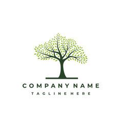Vibrant tree logo design tree tree life logo vector