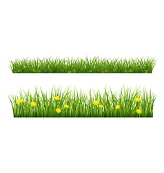 Summer grass vector image