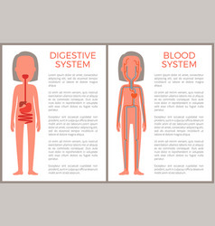 digestive and blood system color anatomical image vector image