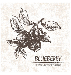 Digital detailed blueberry hand drawn vector
