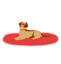 Dog lying on carpet resting isolated at white vector
