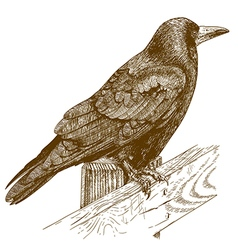 etching raven vector image vector image