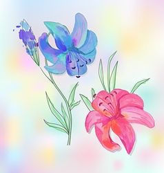 Two lilies vector image