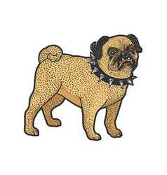 Angry pug in spiked collar sketch vector