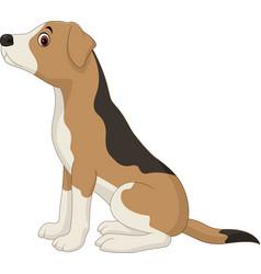 dog sitting isolated on white background vector image