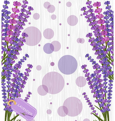 Lavender flower on white wood texture background vector