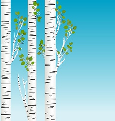 Birch trees with green leaves background vector image vector image