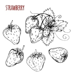 Set strawberry drawing vector image vector image