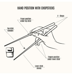 Hand position with chopsticks vector image vector image