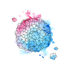 beautiful blue and pink hydrangea vector image