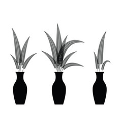 fern flowers in vaes vector image