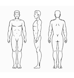 Male body vector