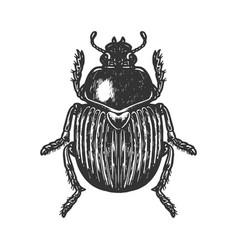 scarab beetle engraving vector image