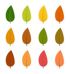 set of twelve autumn leaves vector image