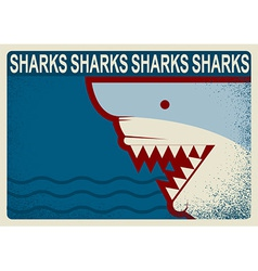 Shark poster background for design vector image