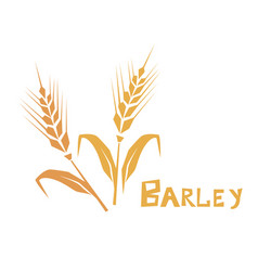 Wheat or barley ear cereal plants agriculture vector
