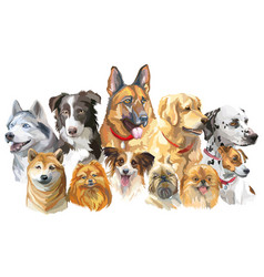 set of big and small dog breeds vector image