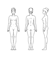 Female body vector image vector image