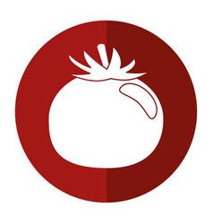 tomato vegetable healthy food icon vector image
