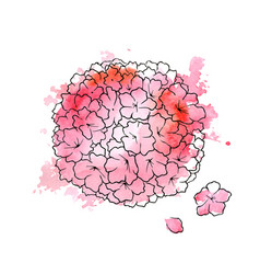 beautiful pink hydrangea vector image